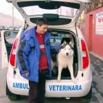 cabinet veterinar Tazy vet titan