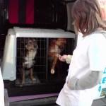 ambulanta veterinara bucuresti ana vet