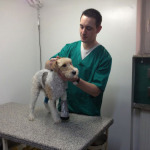 cabinet veterinar crivet titan