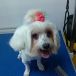 cosmetica catei cabinet veterinar Sector 6