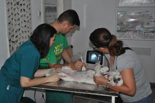 veterinari sector 2 pet land